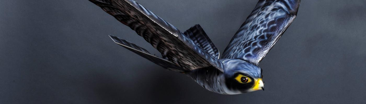 Robird: robotic birds of prey